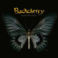 Black Butterfly packshot
